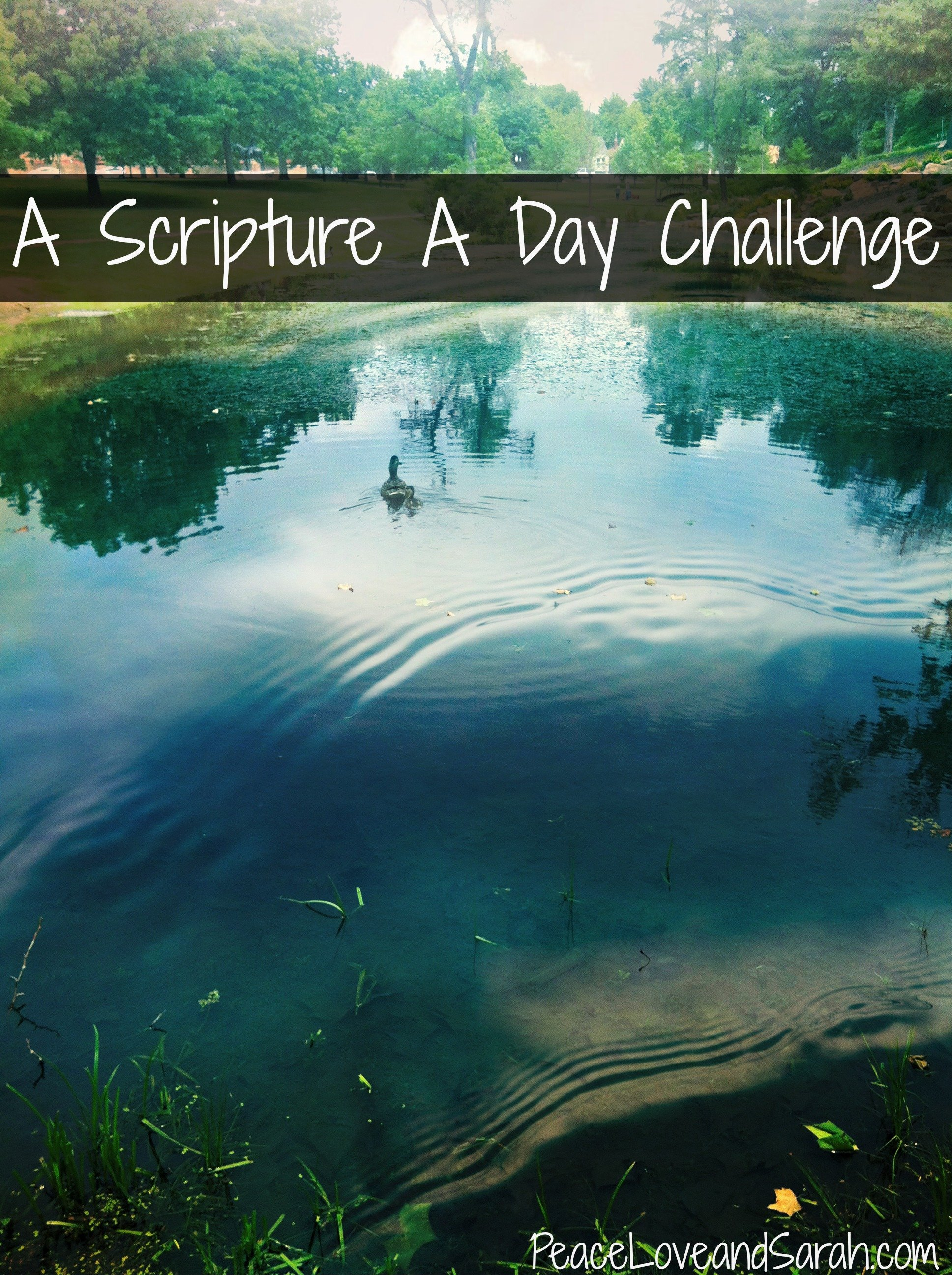 A Scripture a Day Challenge